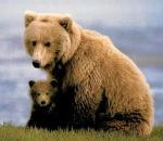 Mama-and-baby-bear